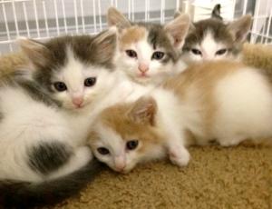Romeo,Juliette,Olivia,Phylis