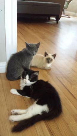 3-amigas