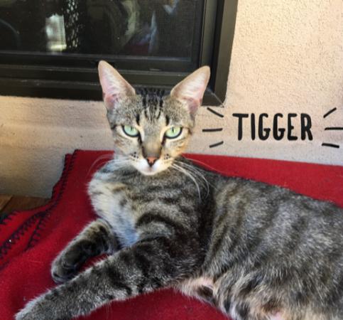 tigger.PNG