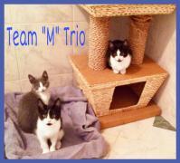 6-19-19 M Team Trio