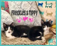 7-22-19 Freckles Tippy