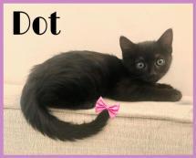 7-31-19 BowtieDot
