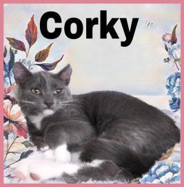 8-10-19 Corky
