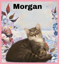8-10-19 Morgan
