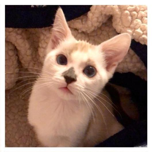 9-5-19 Lindseys kittens