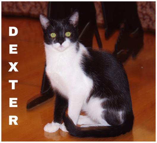 ch dexter1.JPEG