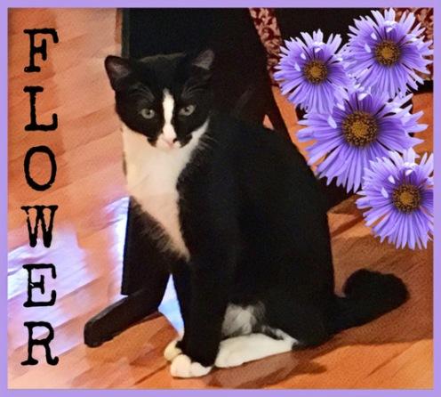 ch flower.JPEG